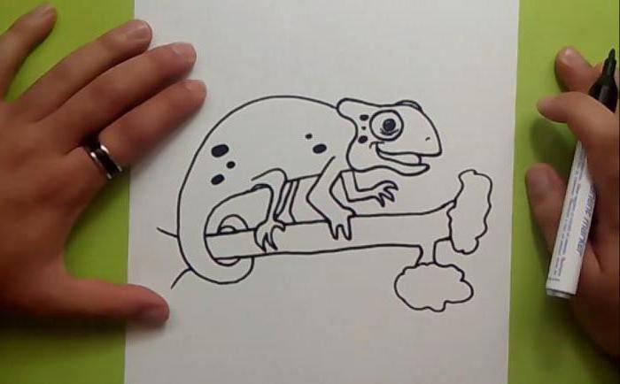 как нарисовать хамелеона поэтапно для начинающих