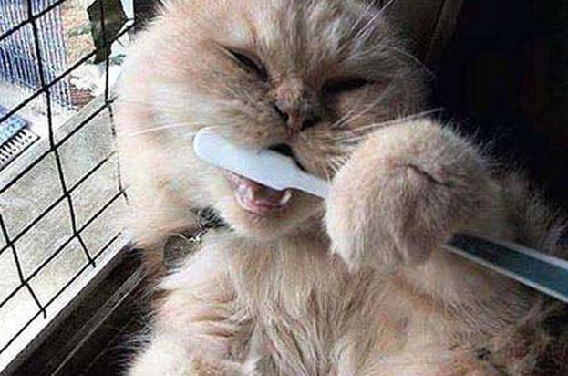 почему воняет изо рта у котят