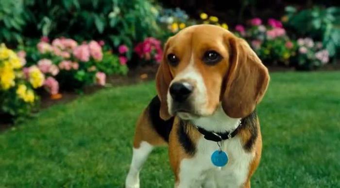 Самые лучшие фильмы про собак тоби магуайр фильмы