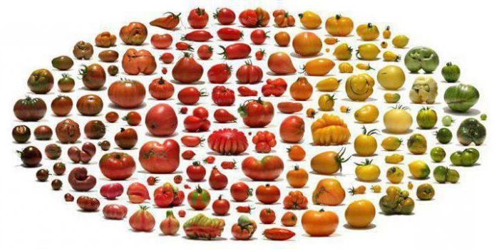 при каком заболевании нельзя есть помидоры