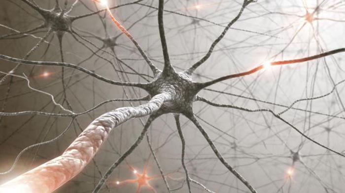 к периферической нервной системе относятся
