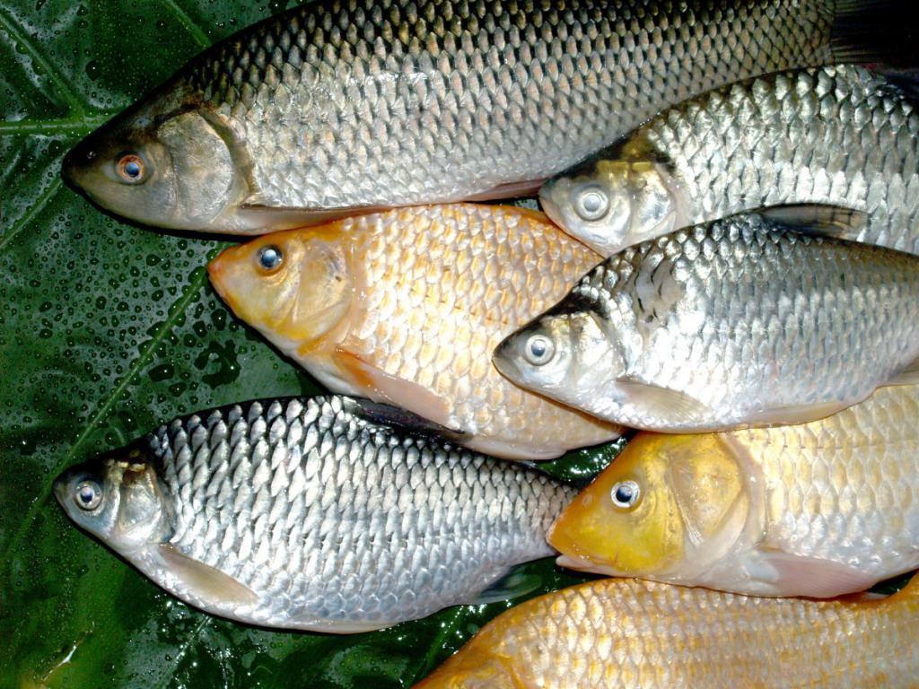 ильинский пруд рыбалка саратов