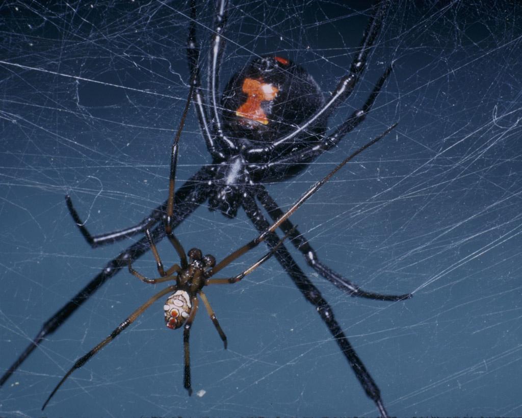 паук и паучиха картинки комментариях