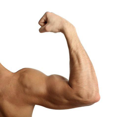 За что отвечают мышцы