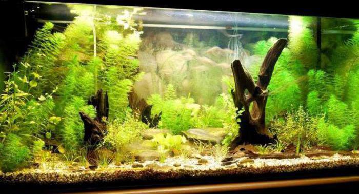 Все об аквариумах для начинающих с пошагово в