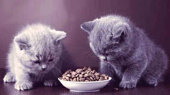 Правильное питание котенка