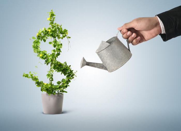 Кредит на развитие бизнеса для ООО: пакет документов, условия