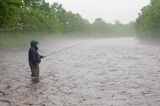 какая рыба клюет в августе на оке