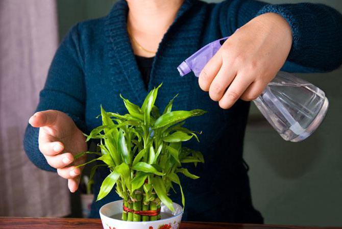 перекись водорода для комнатных цветов