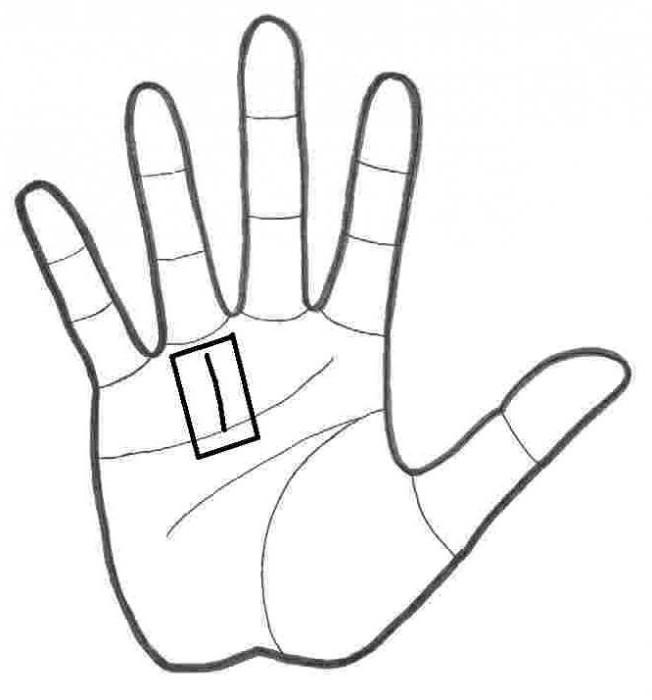 линия солнца на руке значение