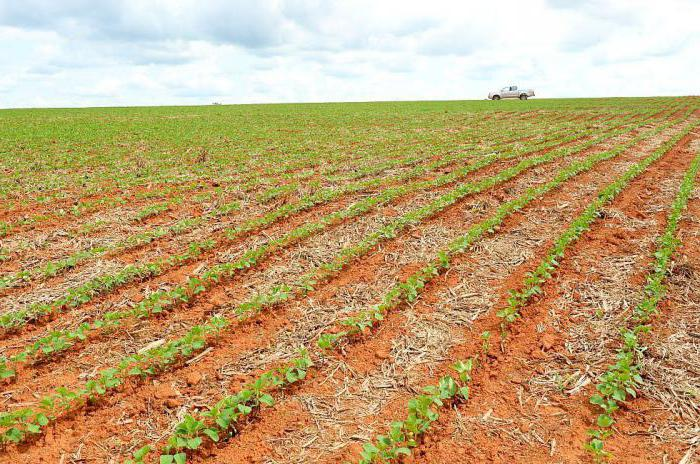 прекращение пожизненно наследуемого права владения земельным участком