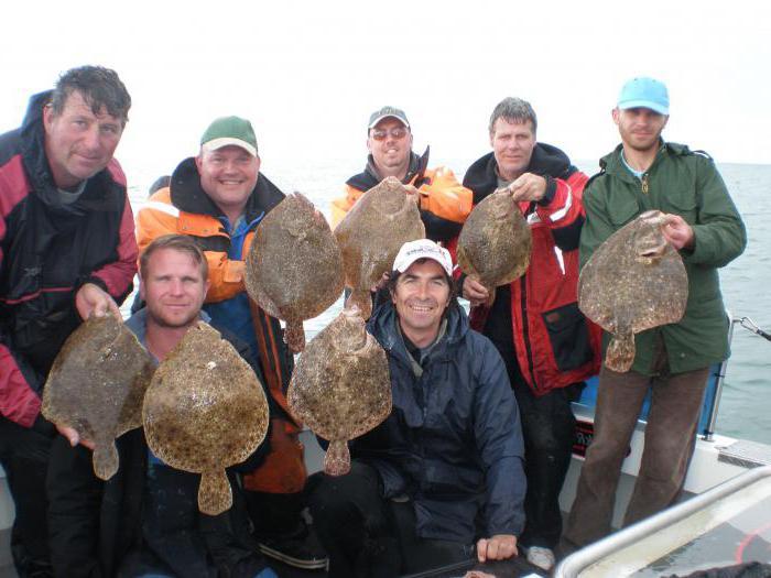Снасти на камбалу в Черном море: результат многолетнего опыта рыбаков