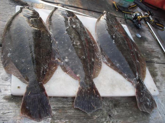 сахалин рыбная ловля  получи камбалу