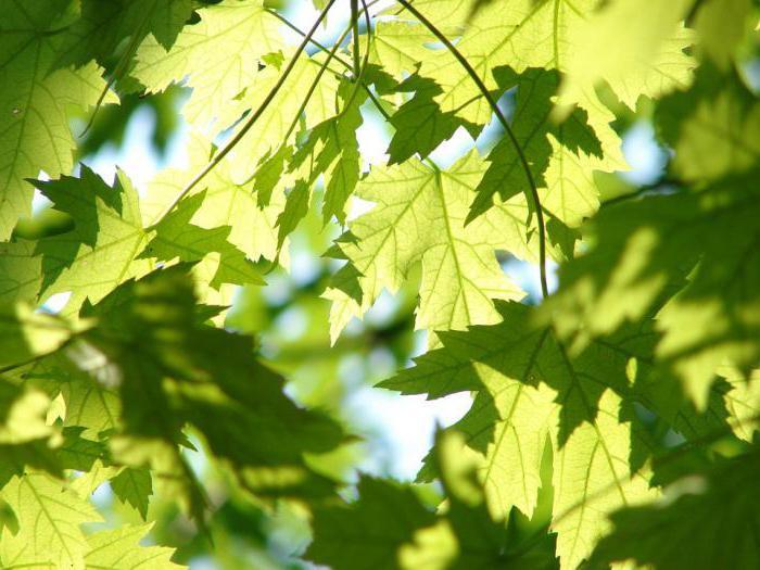 Для чего нужна зеленая нить на запястье?