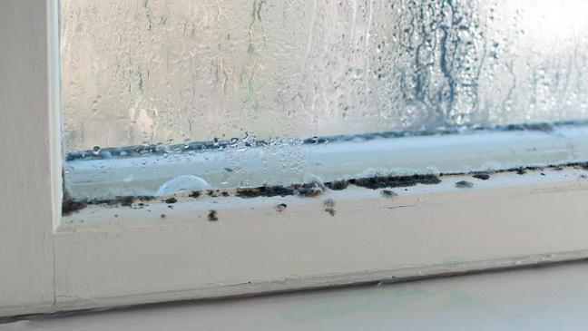 Как убрать влажность в квартире народными средствами?