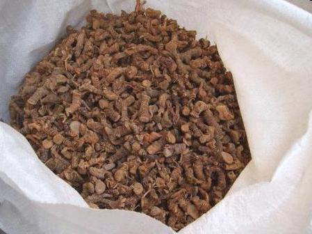 Настойка на калгане на самогоне: свойства, польза и вред