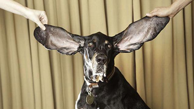 шевелить ушами полезно