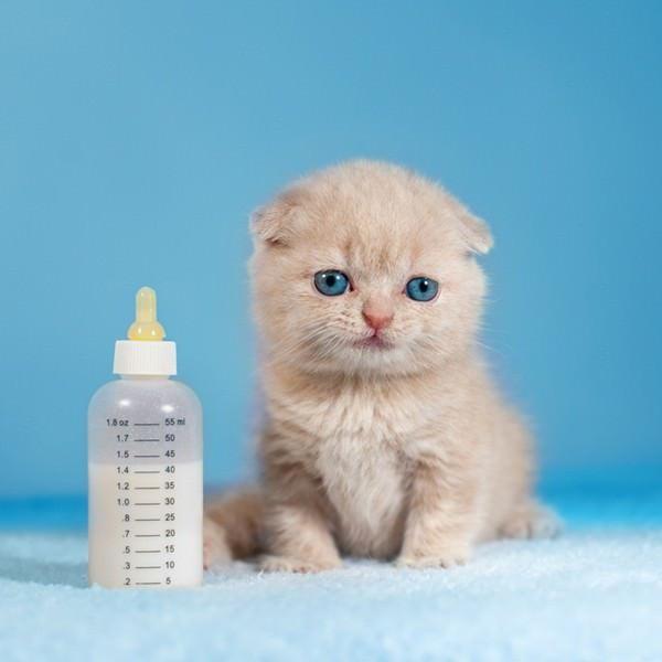 Чем кормить 1 5 месячного котенка