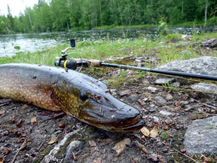 триал русская рыбалка масново