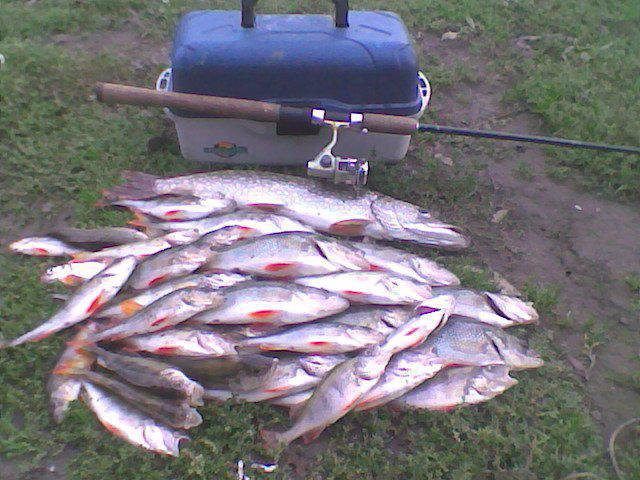 Рыбалка в коломне на карася