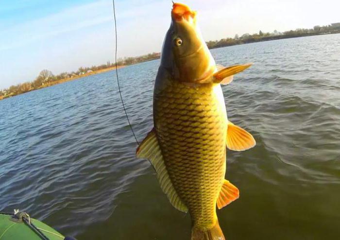 рыбалка озеро великое во владимирской области