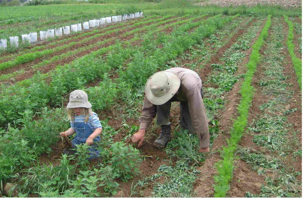 Фермерру выращивание моркови 78