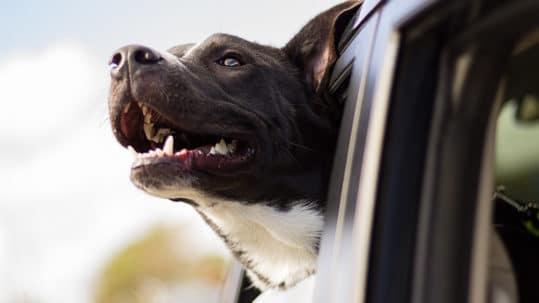 норма дыхания у собаки