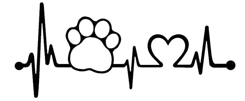 как проверить у собаки пульс
