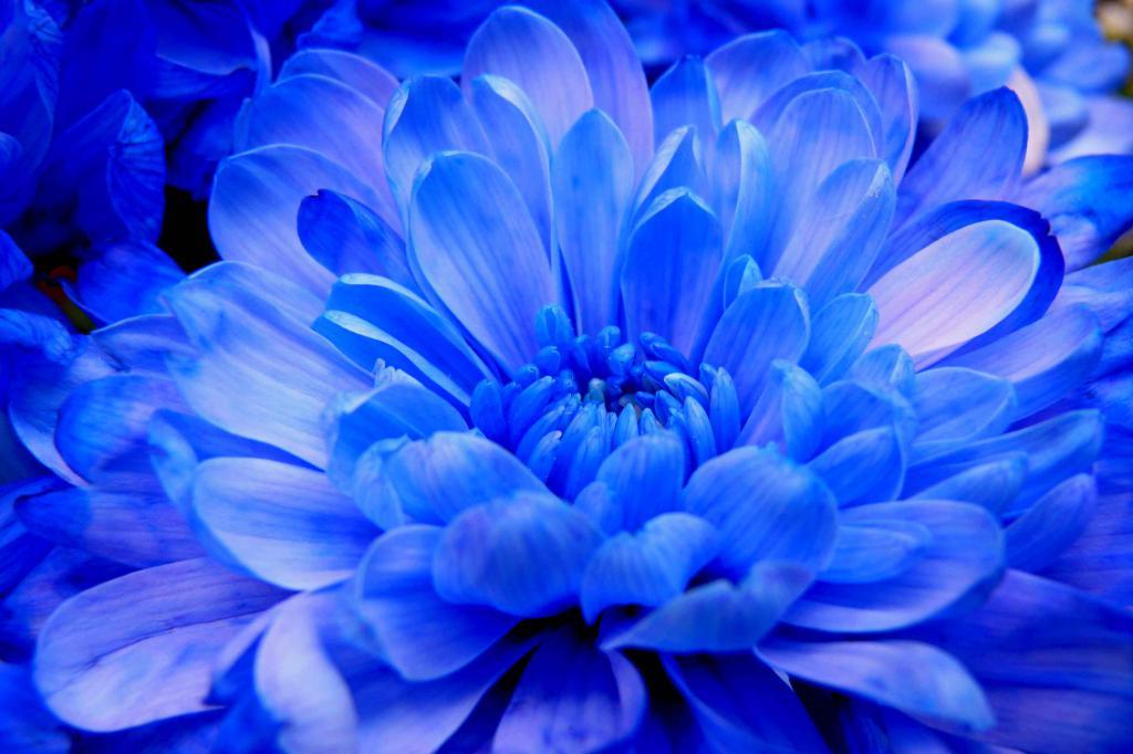 Картинки синего цвета на телефон