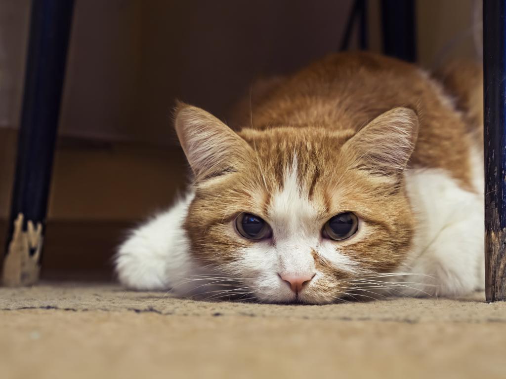 кошке нездоровится