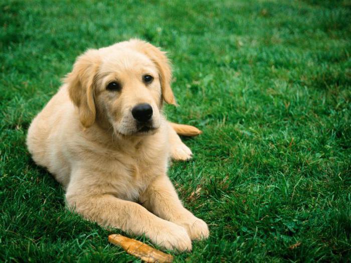 вакцина против бешенства для собак