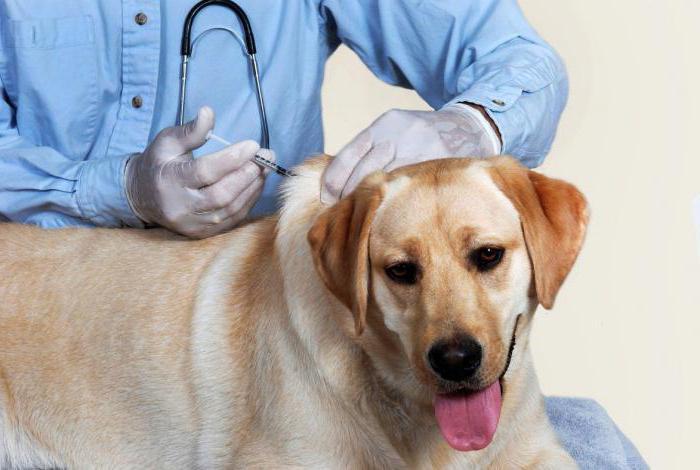 вакцина против бешенства собак инструкция по применению