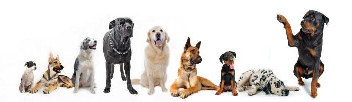 как проявляется аллергический отит у собаки