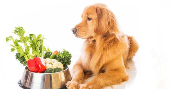 у собаки аллергический отит