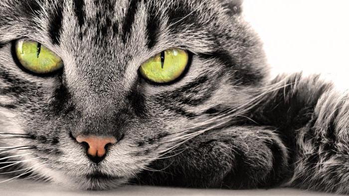 Самый лучший корм и котов для кошек по мнению