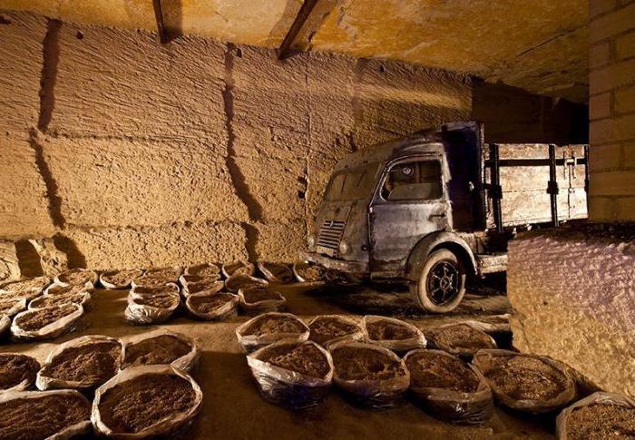 шампиньоны выращивание в домашних условиях в подвале