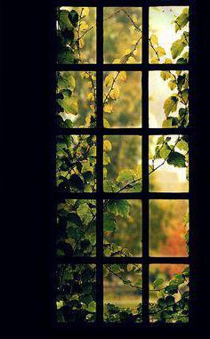 Вид из моего окна сочинение
