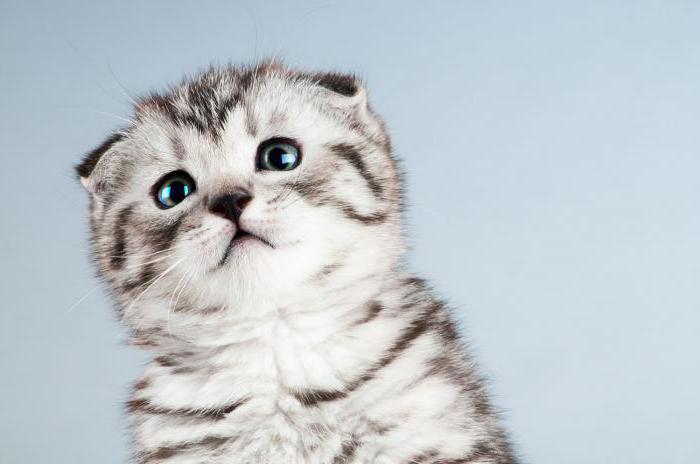 породы диких котов
