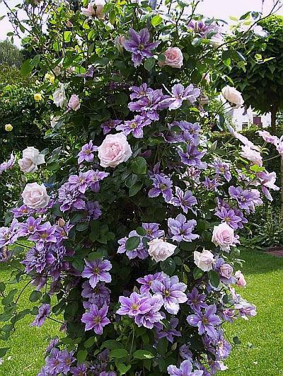 самые красивые розы в мире лучшие сорта