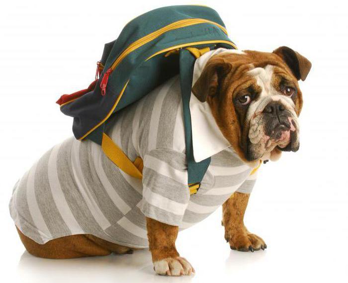 Перевозка собак в машине: правила и приспособления