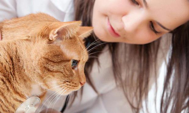 аллергия у кошек лечение в домашних условиях