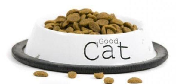 аллергия на кошек как избавиться в домашних