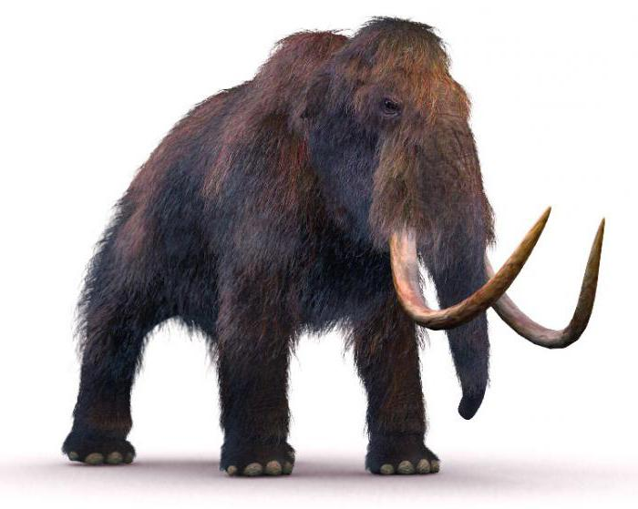 Huge mammoth: how to draw and to teach this kid
