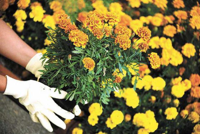 Что означает во сне сажать цветы?