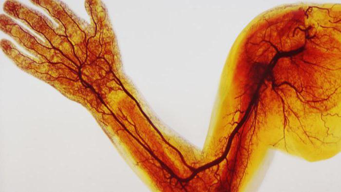 Гинкобилоба лечит сексуальный невроз