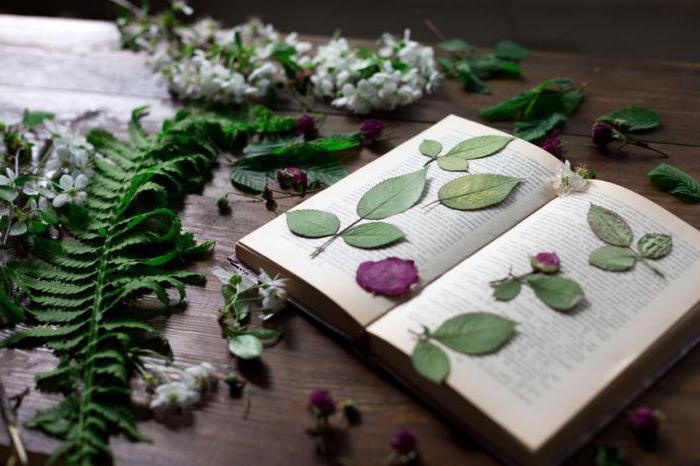 как правильно составить гербарий