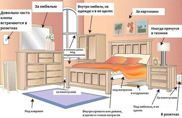 Где живут клопы в квартире чаще всего?