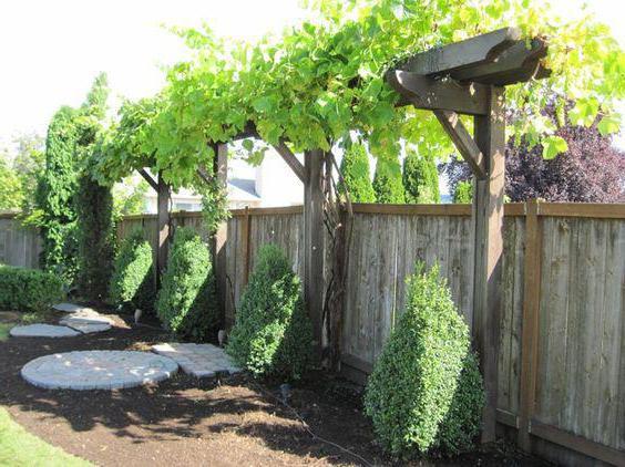 Как сделать перголы для винограда 906
