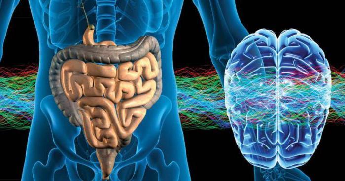 метасимпатический отдел нервной системы