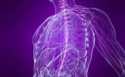 вегетативная нервная система симпатический, парасимпатический, метасимпатический